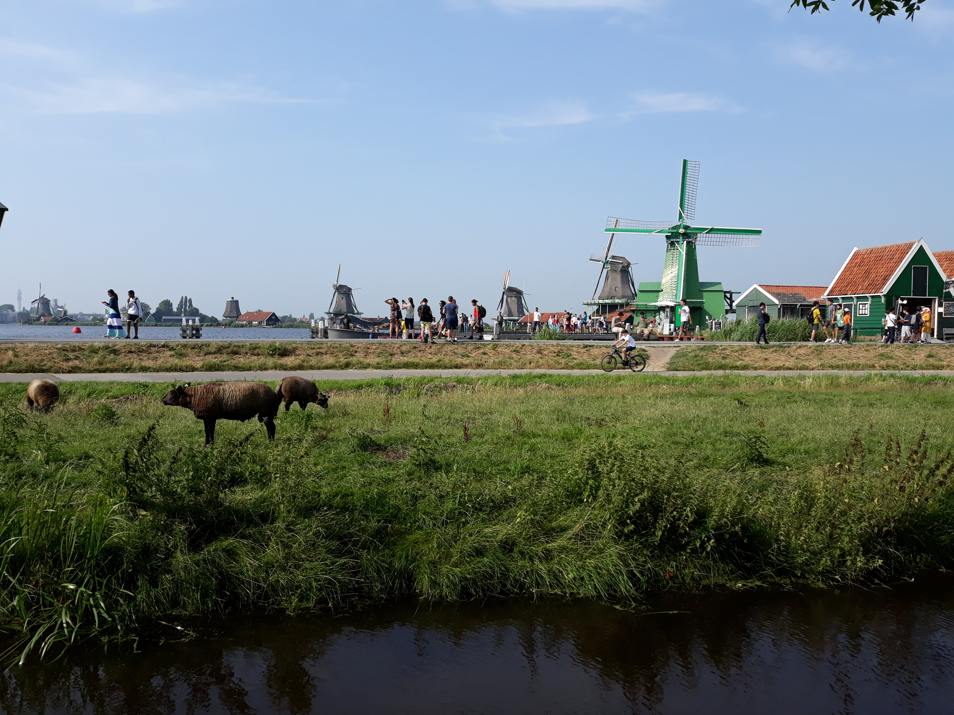 Windmills at waterside