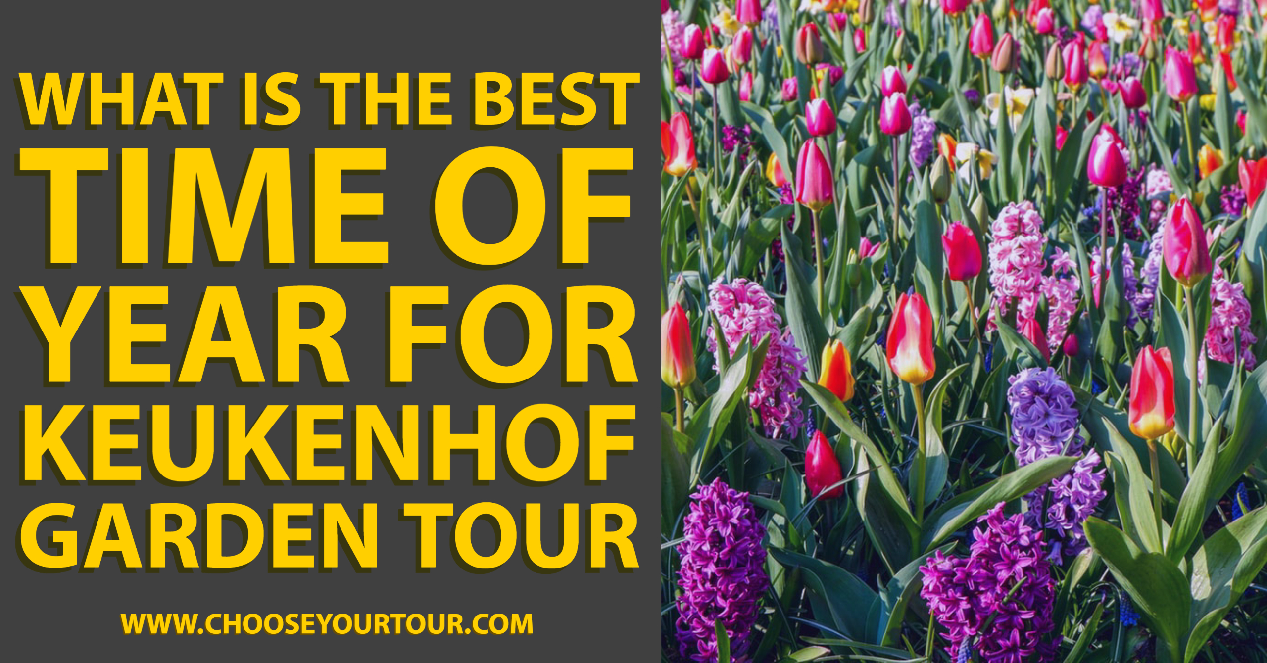 What is the Best Time of Year for Keukenhof Garden Tour